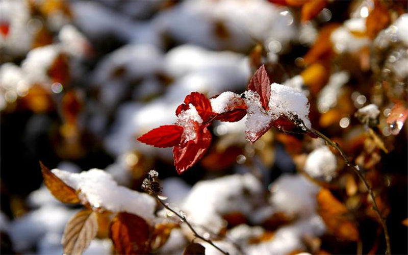 Winter is dry and cold easy to get sick, follow enkor to do so, relaxed winter